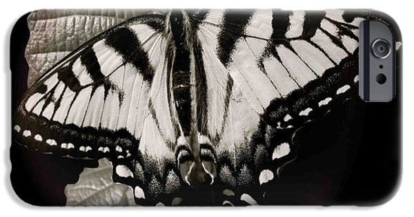 Animal Photograph Mixed Media iPhone Cases - Rings Of Monarch iPhone Case by Debra     Vatalaro
