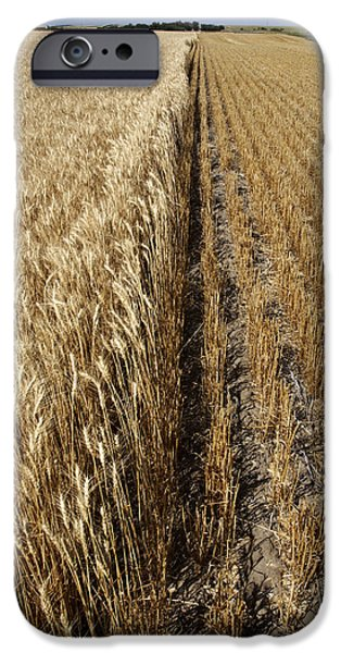 iPhone Cases - Ripened wheat and stubble in Saskatchewan field iPhone Case by Mark Duffy