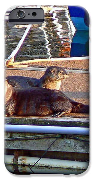 River Otters at the Harbor iPhone Case by Pamela Patch