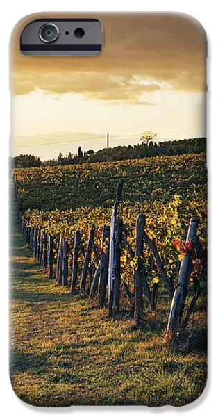 Road Through Vineyard iPhone Case by Jeremy Woodhouse