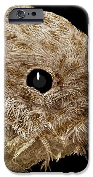 Robin Chick, Sem iPhone Case by Steve Gschmeissner