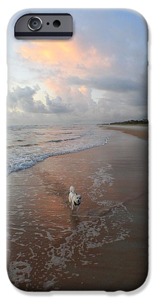 Jack Russell iPhone Cases - Rocko at Sunrise iPhone Case by Mandy Shupp