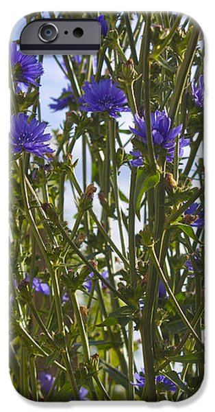 Romaine Lettuce Flowers 2 iPhone Case by Donna Munro