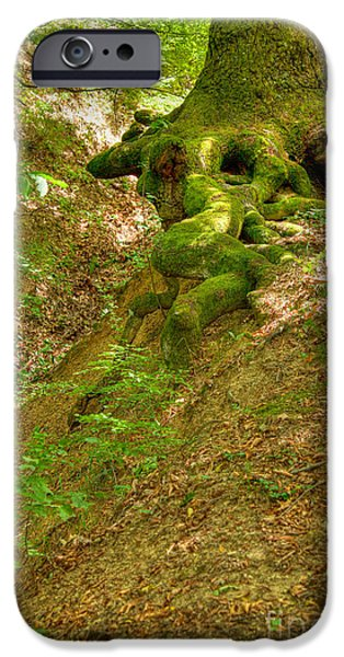Tree Roots iPhone Cases - Roots of a tree at Ciucaru Mare forest iPhone Case by Gabriela Insuratelu