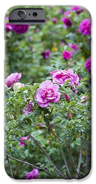 Rose Garden iPhone Case by Frank Tschakert