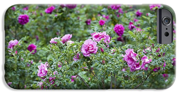 Green Roses iPhone Cases - Rose Garden iPhone Case by Frank Tschakert
