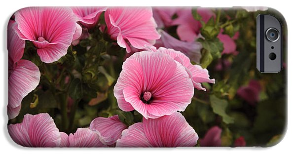 Best Sellers -  - Prescott iPhone Cases - Rose Mallow Flowers iPhone Case by Erin Paul Donovan