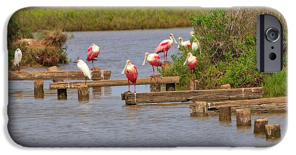 Spoonbill iPhone Cases - Roseate Spoonbills and Snowy Egrets iPhone Case by Louise Heusinkveld