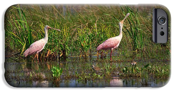 Spoonbill iPhone Cases - Roseate Spoonbills iPhone Case by Louise Heusinkveld