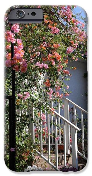 Roses in Winter iPhone Case by Susanne Van Hulst