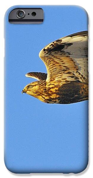 Rough-legged Hawk iPhone Case by Tony Beck