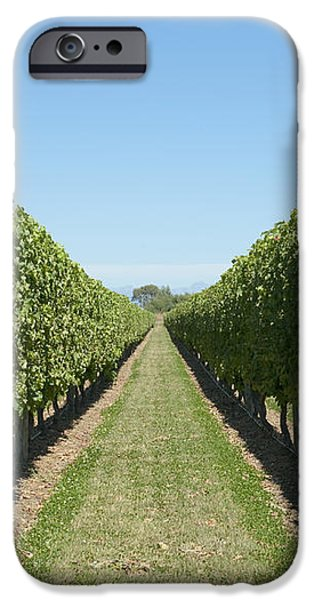 Row of Grapevines in Vineyard iPhone Case by Dave & Les Jacobs