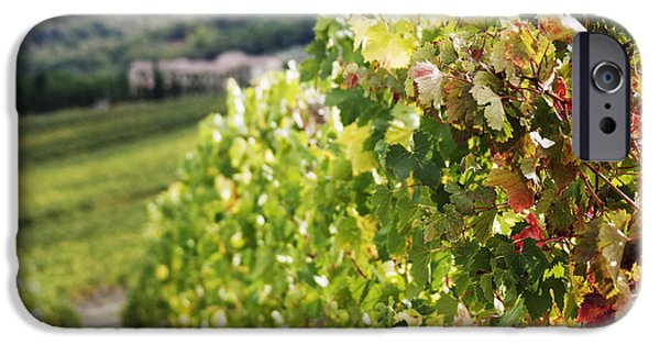 Grapevine Red Leaf iPhone Cases - Row of Grapevines in Vineyard iPhone Case by Jeremy Woodhouse