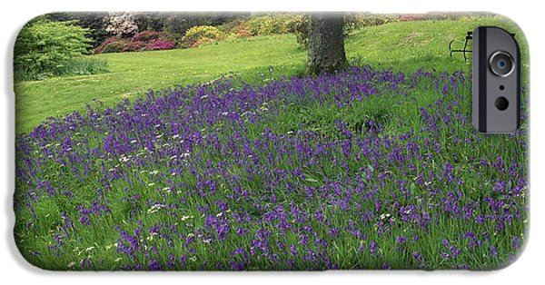 Springtime In The Park iPhone Cases - Rowallane Garden, Co Down, Ireland Wild iPhone Case by The Irish Image Collection