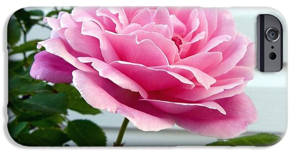 Duchess iPhone Cases - Royal Kate Rose iPhone Case by Will Borden