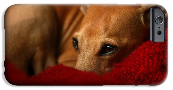 Lazy Red Dog iPhone Cases - Ruby Rest iPhone Case by Angela Rath