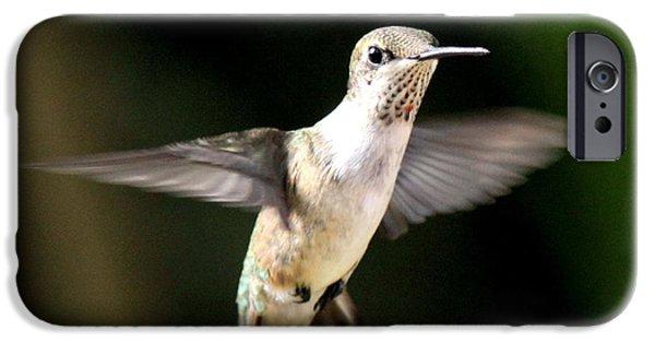 Baby Bird iPhone Cases - Ruby-throated Hummingbird - Standing Still iPhone Case by Travis Truelove