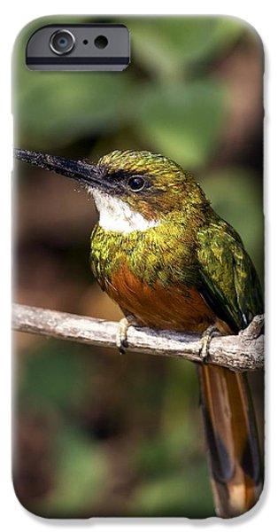 Rufous-tailed Jacamar Male iPhone Case by Tony Camacho