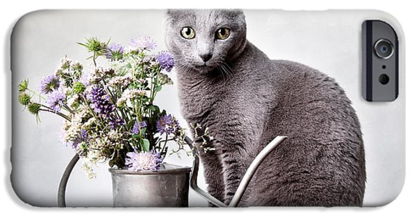 Housecat iPhone Cases - Russian Blue 02 iPhone Case by Nailia Schwarz