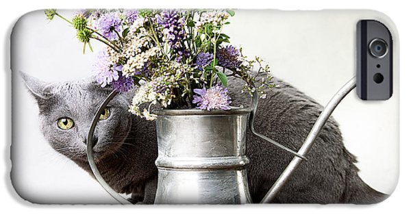 Housecat iPhone Cases - Russian Blue 03 iPhone Case by Nailia Schwarz