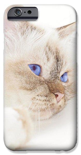 Sacred Cat of Burma iPhone Case by Melanie Viola