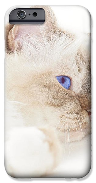 Sacred Cat of Burma iPhone Case by Melanie Viola