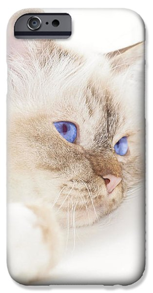 Familiar iPhone Cases - Sacred Cat of Burma iPhone Case by Melanie Viola