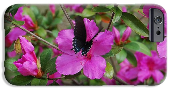 Butterfly Prey iPhone Cases - Safe Landing iPhone Case by Judy Hall-Folde