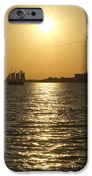 Flocks Of Birds iPhone Cases - Sailboat Sunset on the Charleston Harbor iPhone Case by Dustin K Ryan
