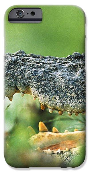 Saltwater Crocodile Crocodylus Porosus iPhone Case by Cyril Ruoso