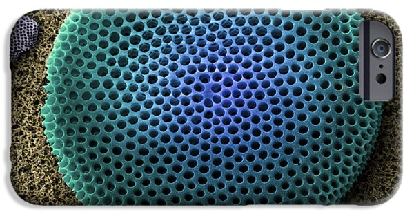 Unicellular Algae iPhone Cases - Saltwater Diatom iPhone Case by Ted Kinsman