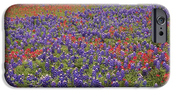 Animalsandearth iPhone Cases - Sand Bluebonnet And Paintbrush iPhone Case by Tim Fitzharris