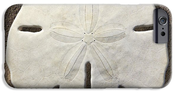 Sand iPhone Cases - Sand Dollar iPhone Case by Mike McGlothlen