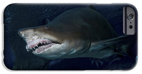 The Tiger iPhone Cases - Sand Tiger Shark, Blue Zoo Aquarium iPhone Case by Mathieu Meur