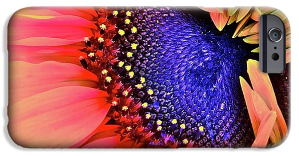 Sunflower Photograph iPhone Cases - Sangria iPhone Case by Gwyn Newcombe