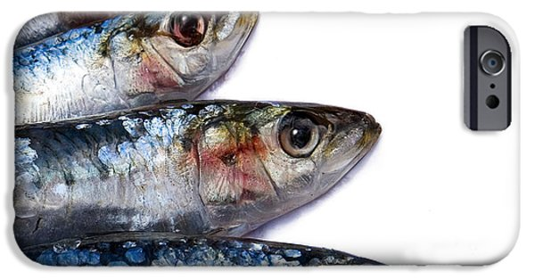 Protein iPhone Cases - Sardines iPhone Case by Jane Rix