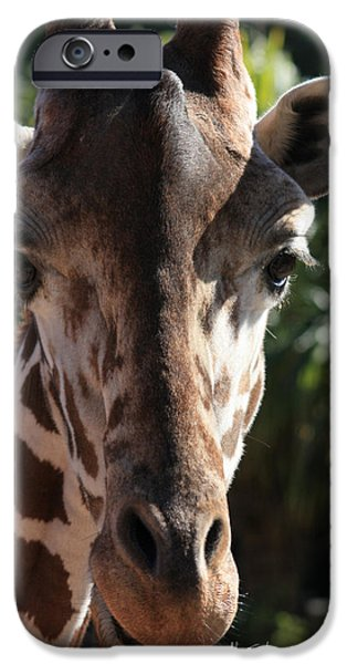 Animal Cards Photographs iPhone Cases - Say Cheese Card iPhone Case by Carol Groenen