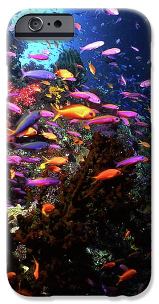 Scalefin Anthias Fish In Coral Garden iPhone Case by Beverly Factor