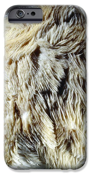 Calcium Carbonate iPhone Cases - Scalenohedral Calcite Crystals iPhone Case by Dirk Wiersma