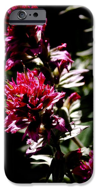 Spirea iPhone Cases - Scarlet Paintbrush iPhone Case by David Patterson