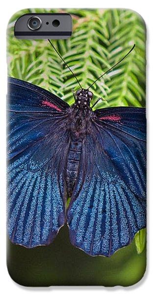 Scarlet Swallowtail iPhone Case by Joann Vitali