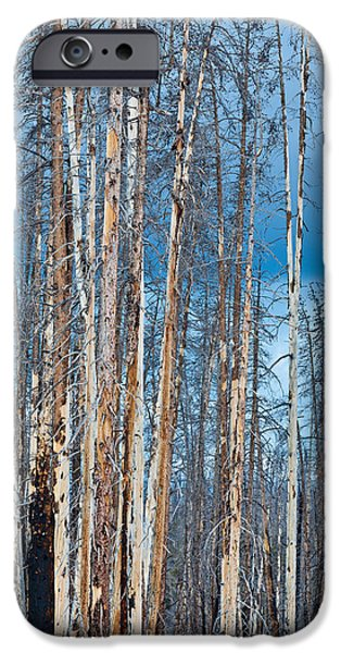 Pines iPhone Cases - Scarred Pines Yellowstone iPhone Case by Steve Gadomski