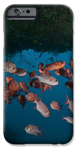 School Of Red Bigeye Under A Rocky iPhone Case by Mathieu Meur