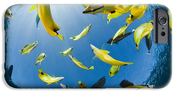 David iPhone Cases - Schooling Butterflyfish iPhone Case by Dave Fleetham - Printscapes