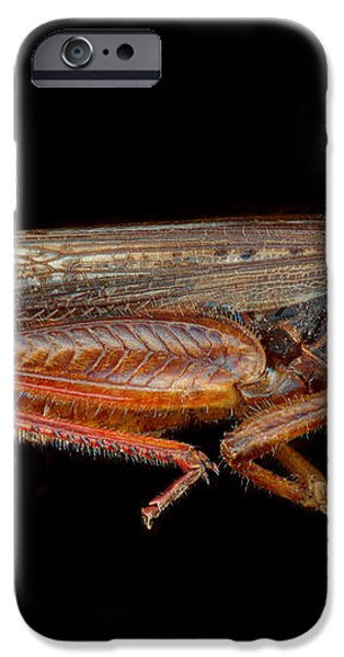Science - Entomology - The specimin iPhone Case by Mike Savad