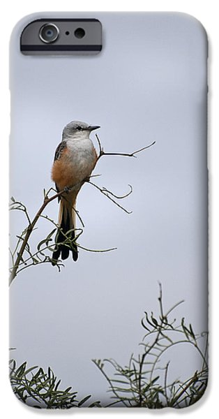 Animals Photos iPhone Cases - Scissor Tailed Flycatcher iPhone Case by Melany Sarafis