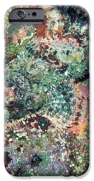 Scorpionfish iPhone Case by Gregory G. Dimijian