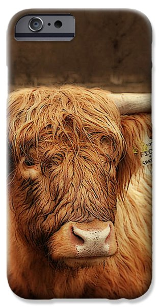 Scottish Moo Coo - Scottish Highland cattle iPhone Case by Christine Till
