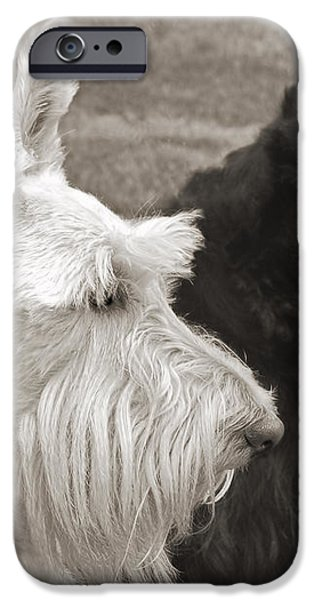 Scottish Terrier Dogs in Sepia iPhone Case by Jennie Marie Schell