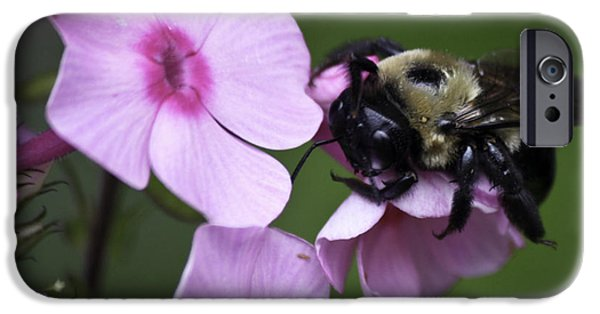 Phlox iPhone Cases - Scratch That Itch iPhone Case by Teresa Mucha